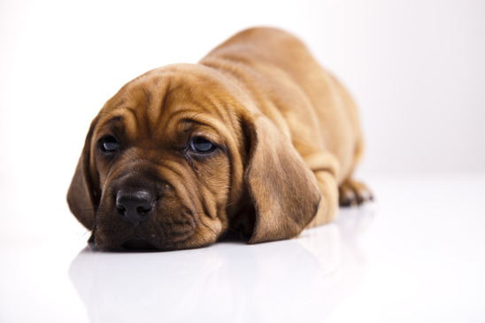 Fish oil for dogs fishy fats for Is fish bad for dogs